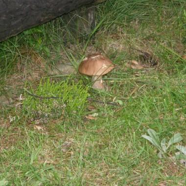 pierwsze grzyby w tym roku