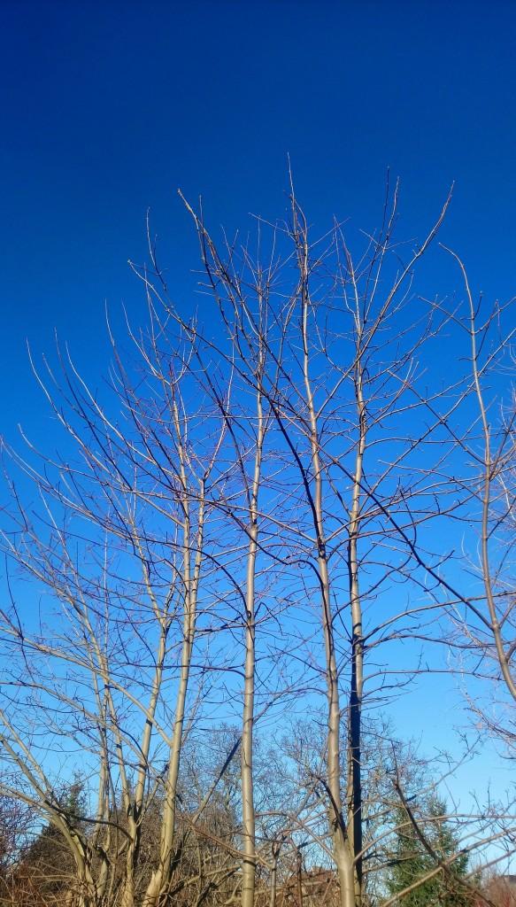 Dekoratorzy, Czekając na wiosnę .................. - ................i błękit nieba ............i słoneczko................