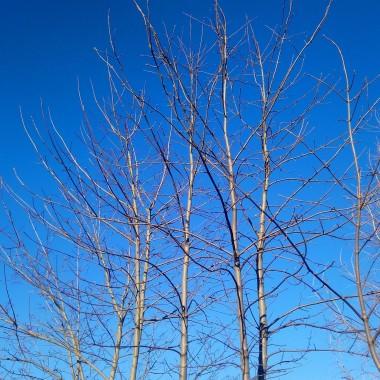 ................i błękit nieba ............i słoneczko................