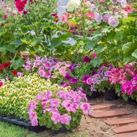Pięć najpiękniejszych wiosennych kwiatów – subiektywny ranking