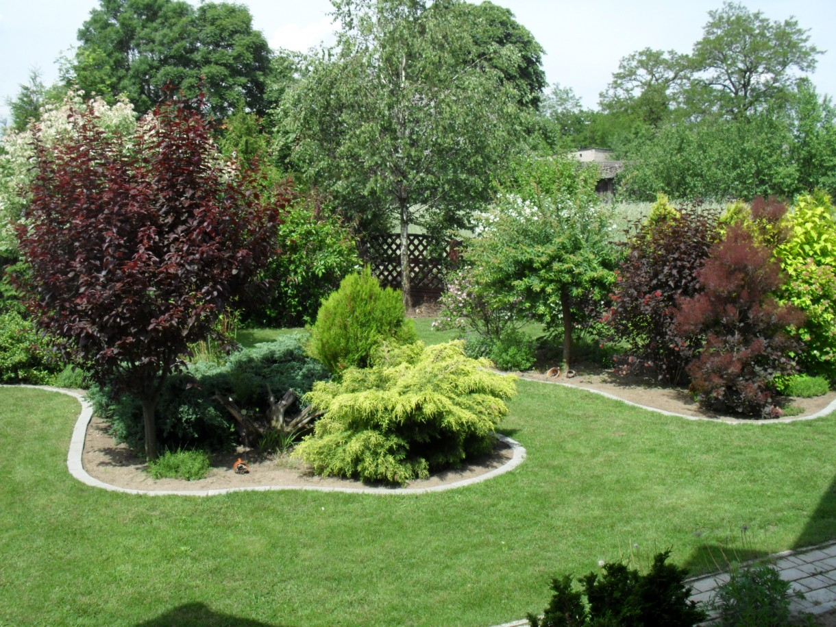 Pozostałe, Mój ogród w czerwcu:)