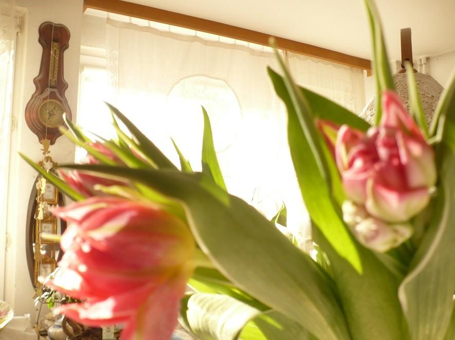 Pozostałe, Lutowa...............zimowa..............z damami.....i panami.. - ................i tulipany................