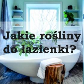 Jakie rośliny do łazienki?