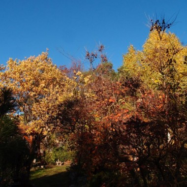 nastała złota jesień