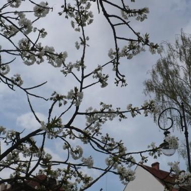 ..........i kwitnące drzewko............
