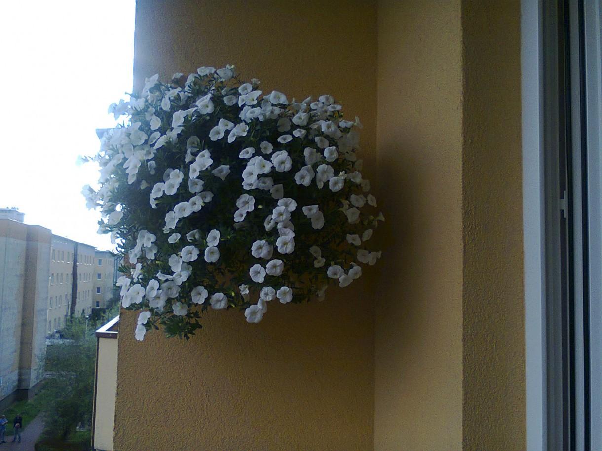 Pozostałe, balkon - To samo milion bells tylko przewieszone z balustrady na ścianę.
