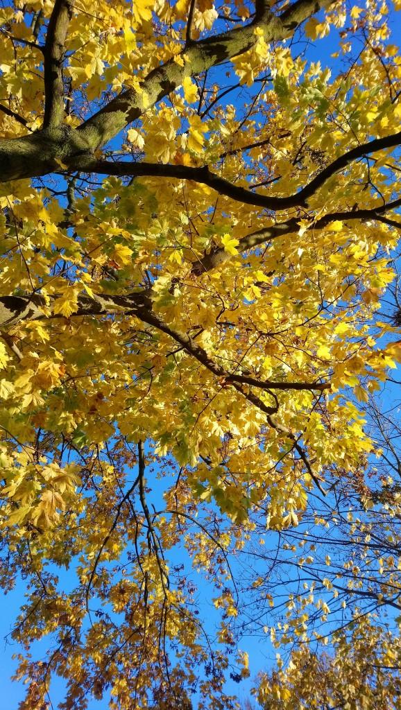 Ogród, Już listopad ............. - .................i złote liście.............