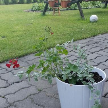 W tym roku trochę zmian w ogrodzie.