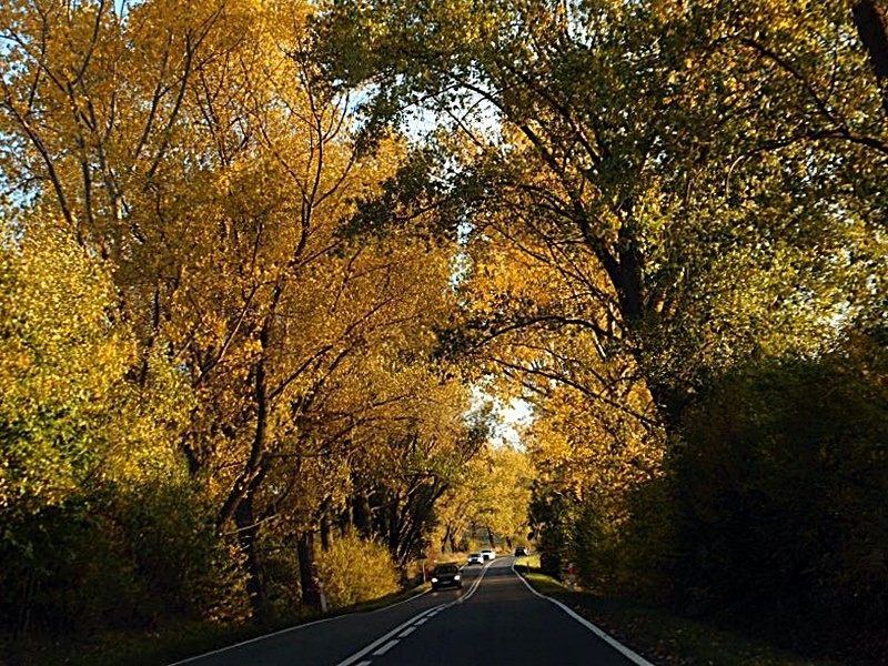Podróże, Jesienną drogą jadąc