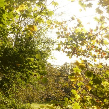 ............i złote i zielone liście na drzewach..................