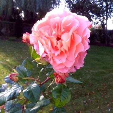 Róże i nie tylko.......