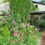 Rośliny, Mój wiejski,ukwiecony ogródek.