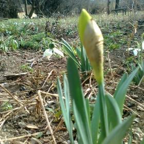 Wiosna już czy zima jeszcze.