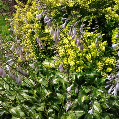 Ujęcie z ogrodu mojej mamy...