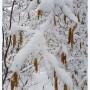 Leśne klimaty, Zima