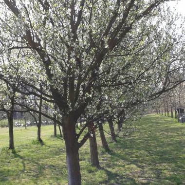 sad wiosną 2