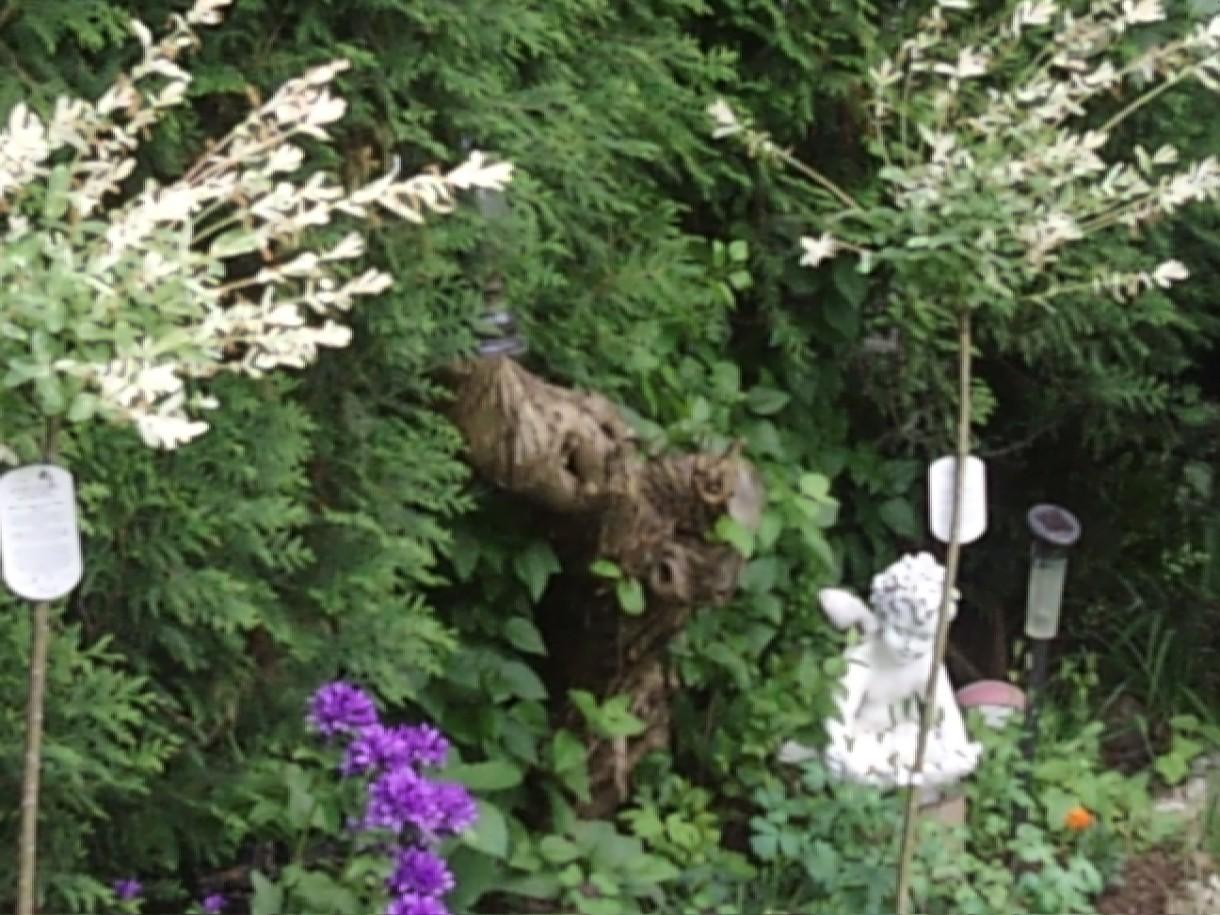 Wizualizacje, ogród,