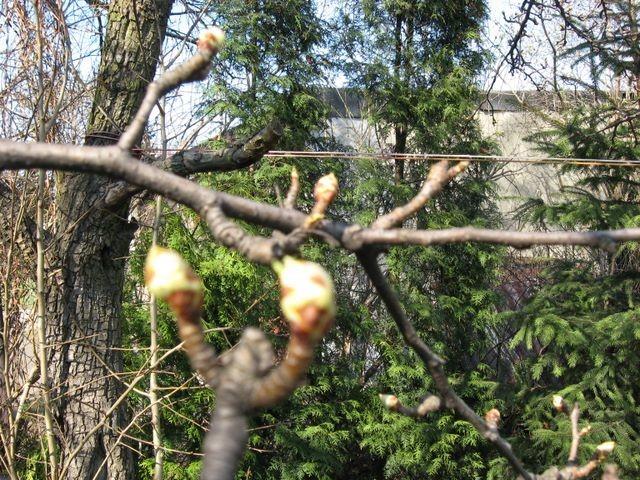 Rośliny, Wiosenny spacer
