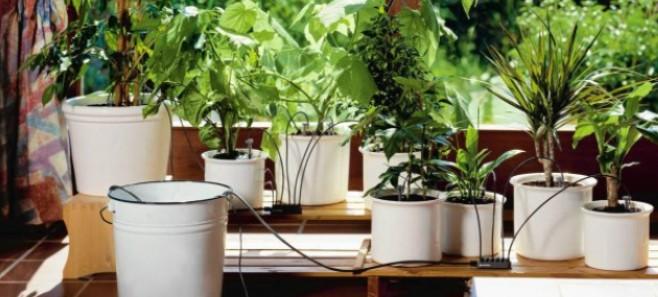 Domowe sposoby. Jak zadbać o rośliny podczas urlopu?