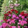 Rośliny, ogródkowo
