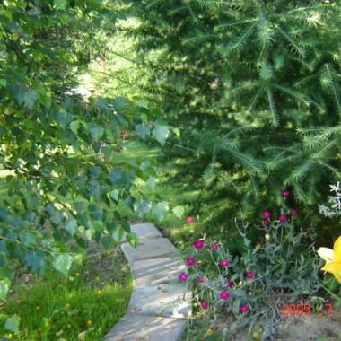 Tegoroczna pogoda nie sprzyja kwiatom ale krzewom i drzewom? Popatrzcie.