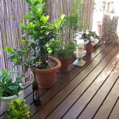 Odnowiłam deski a do barierek przypięłam wiklinowy parawan. Chroni rośliny przed silnym wiatrem, ostrym słońcem i ciekawskimi sąsiadami :o)