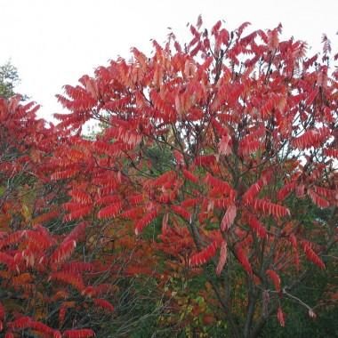 Piękne barwy jesieni.