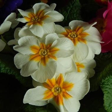 """"""" Wiosny nic już nie zatrzyma ....""""właśnie to usłyszałam dzisiaj oglądając prognozę pogody na najbliższe dni.Z dnia na dzień będzie bardziej zielono i piękniej pomimo że jeszcze gdzieś może na chwile pojawić się śnieg.Nic dziwnego bo """"w marcu jak w garncu"""" a potem jeszcze """"kwiecień plecień....""""ale ja jestem dobrej myśli bo przed nami najpiękniejszy czas:)"""