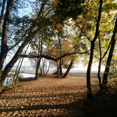 Złoto jesieni i moje zielone bombki.....