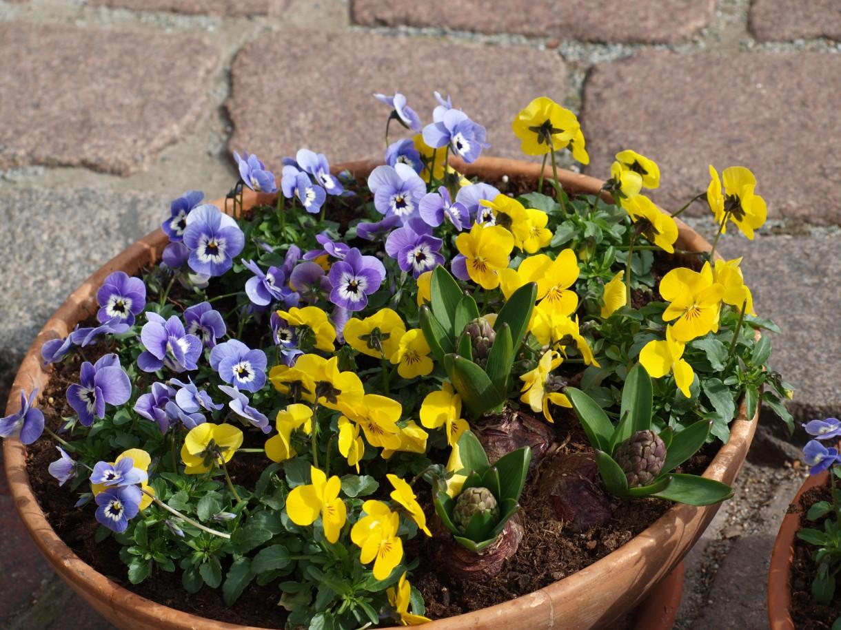 Rośliny, Wiosna w Ogrodach