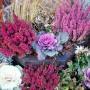 Rośliny, Jesienne kwiaty na balkon - Kapusta ozdobna pięknie komponuje się z wrzosami i trawami ozdobnymi.  Fot.123RF.com