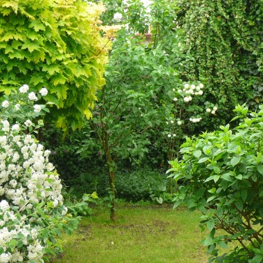 Radziłam sobie jak umiałam, doświadczenia nie miałam żadnegoNie pokazuję trawnika, bo został dopiero co wyczesany, wygląda tragicznie. Ogródek ma kształt litery C. Jest skromny, raczej zielony, spokojny.