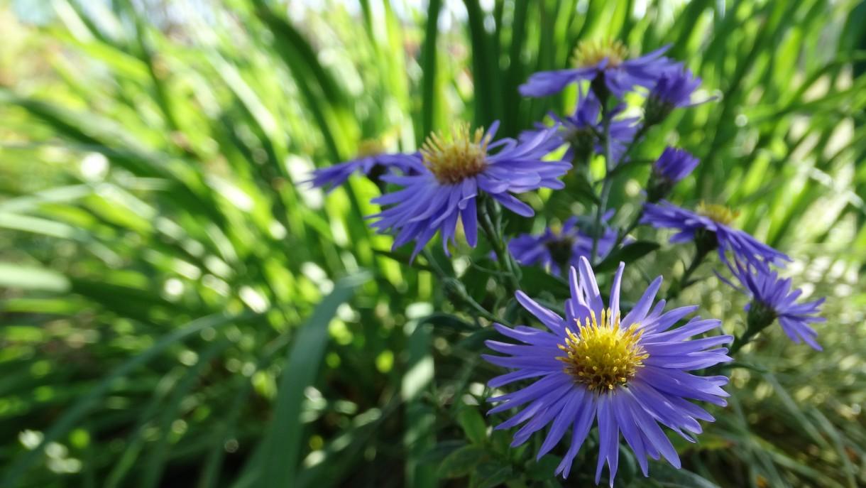 Rośliny, JESIENNE LIŚCIE, LIŚCIE KOLOROWE