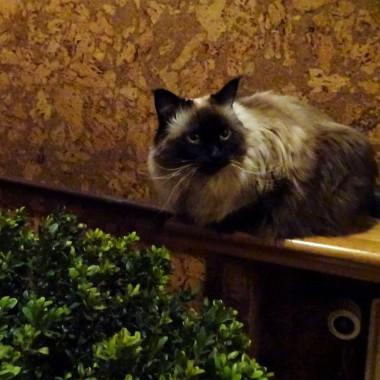 ... z przymrużeniem oka. Dzień kota już był, zima jest a oprócz tego około kuchenne foty, które aspirują do galerii koleżanek. Miał być plagiat, czy jest?