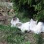 Rośliny, Wiosenny spacer - Kotki wygrzewają się w słoneczku.