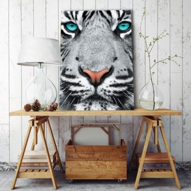 Czarno-biały tygrys o turkusowych oczach jako plakat.