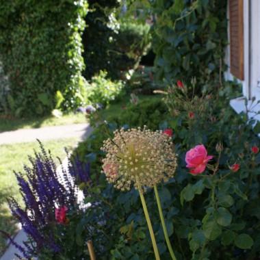 ogród  kilka tygodni później