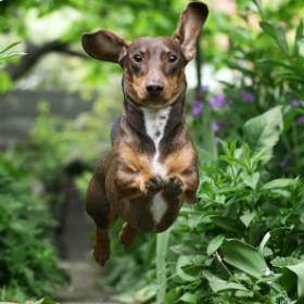 Pies w ogrodzie - jak zapobiec stratom?