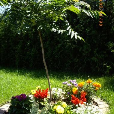 Oto mój ogród, kwiaty i krzewy, a wokół nich moje ukochane kanki, dzbanki, bańki i konewki. Odrobina wspomnień z babcinej zagrody.