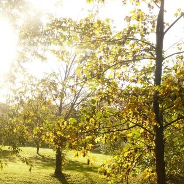 ..............i drzewa w słońcu