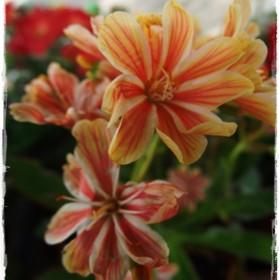 Moja anielska świta ogrodowa i czerwcowe rozkwitanie&#x3B;