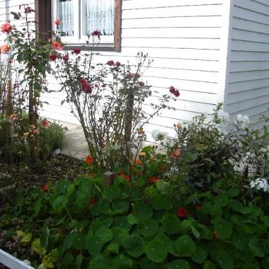 ogrod dawniej