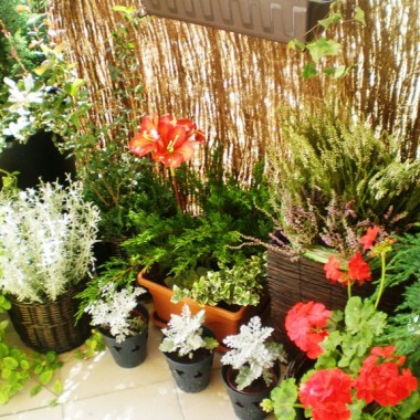 Mini balkon - max zieleni