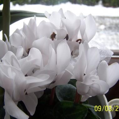 Zmiana klimatu w moim domku i jak na wiosnę przystało - wiosenne roślinki.