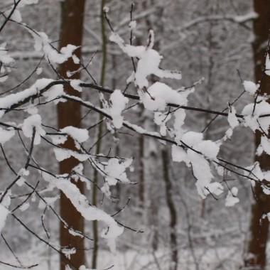 zimowa