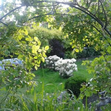 Mój ogród w lesie