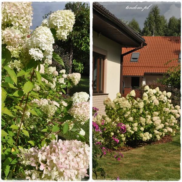 """Ogród, """"Maja w Ogrodzie"""" & wianki na drzwi - magiczny ogród Pani Agnieszki"""