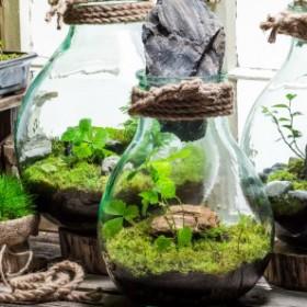 Ogród w szkle — zakładanie i pielęgnacja
