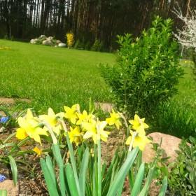 moje ulubione kolory w ogrodzie