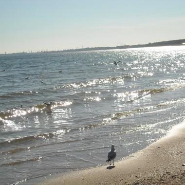 Jeszcze całkiem  letnie fotki znad morza .......................